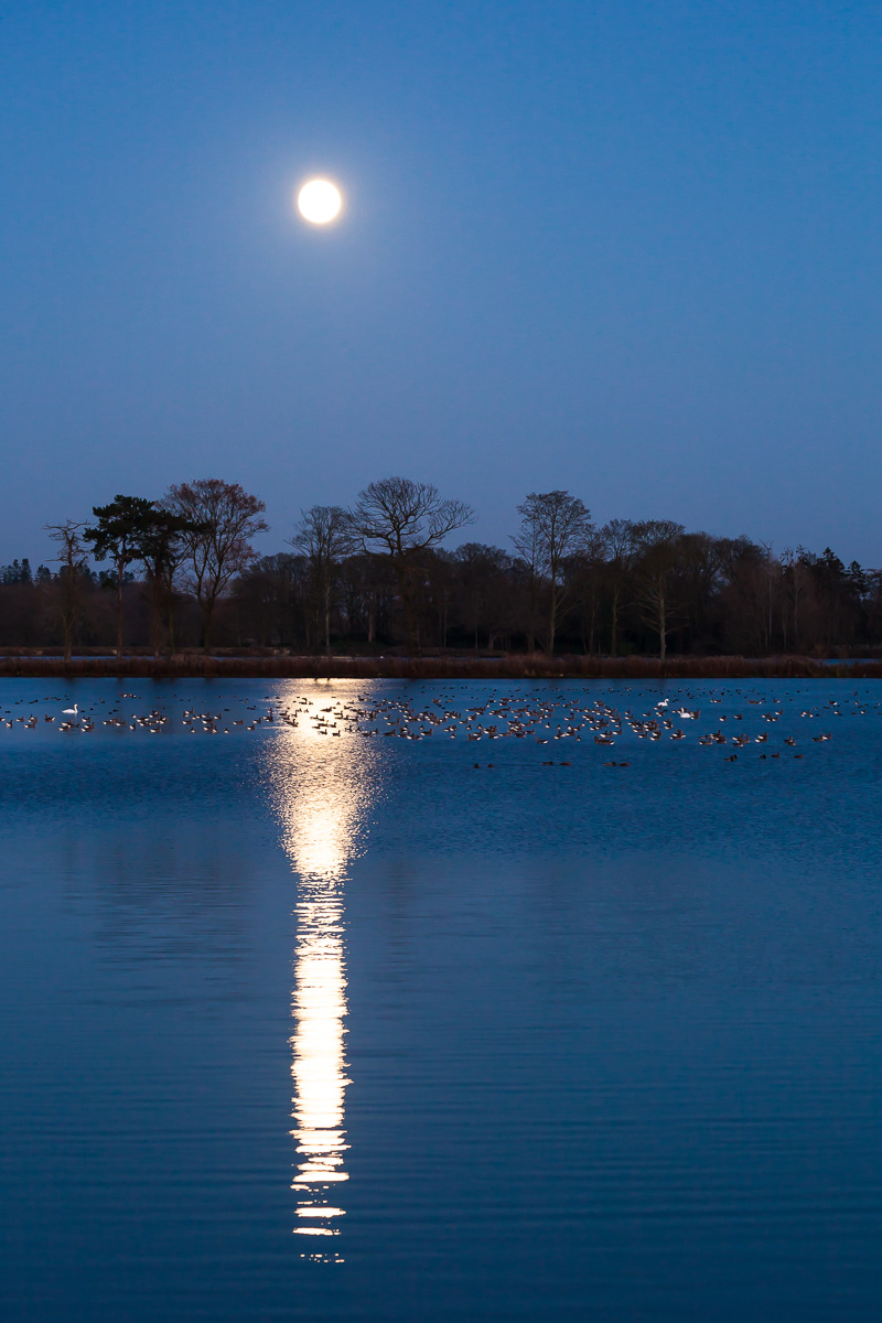 Geese-by-moonlight-by-David-Townshend