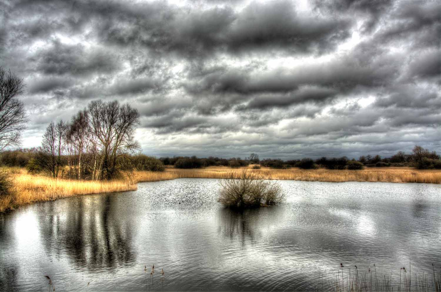 Second Place - Great Fen by Julie Coles