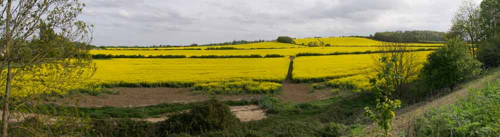 Rape-field-20-of-020-2015-05-10-Chesterton-Rape-field