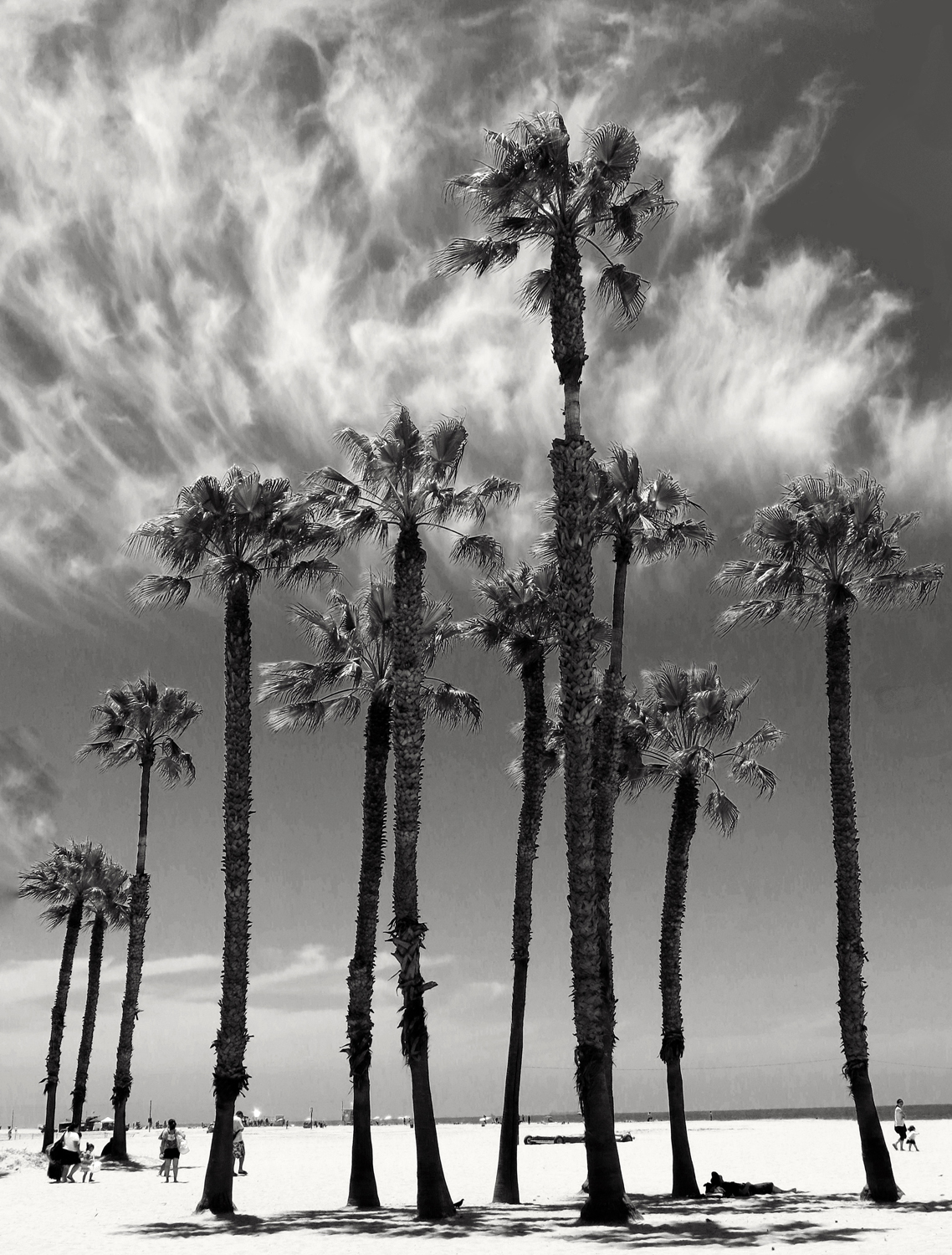 Smoking-palms-by-Robin-Pearson